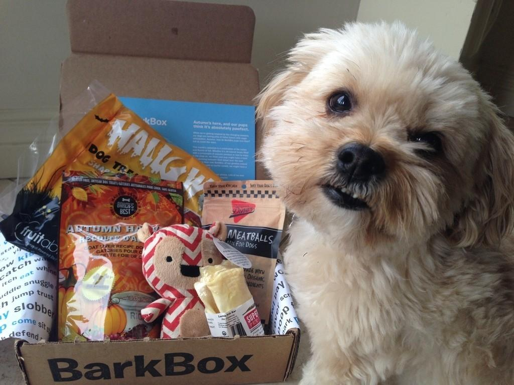 Barkbox Review Coupon Code October 2013 Subscription