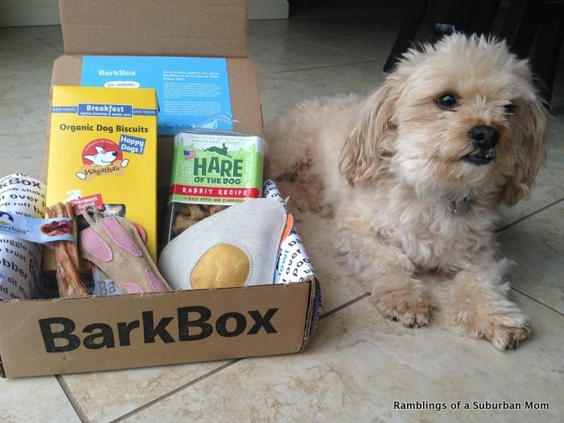 Baxter and his Barkbox