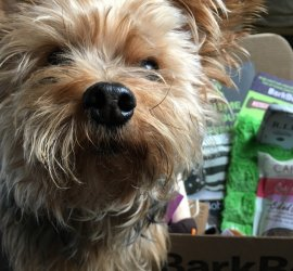 BarkBox October 2016 Subscription Box Review + Coupon Code