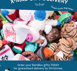 BarkBox - Last Call for Holiday Shipping!