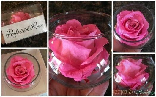 Perfected Rose bloomaker
