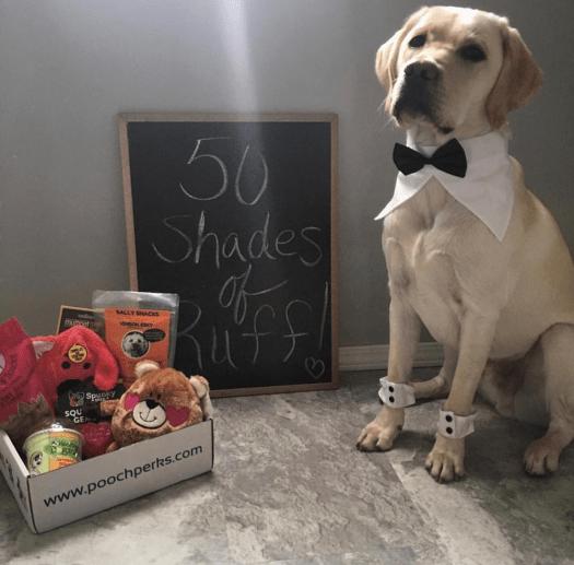 Pooch Perks Valentine's Flash Sale – 50% Off!