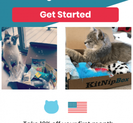 KitNipBox 4th of July Sale - 16% Off First Month!