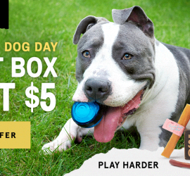 BarkBox Super Chewer Coupon Code - First Box for $5